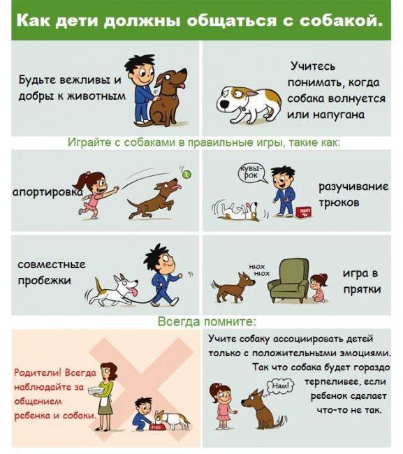Рекомендации для детей касаемо собак
