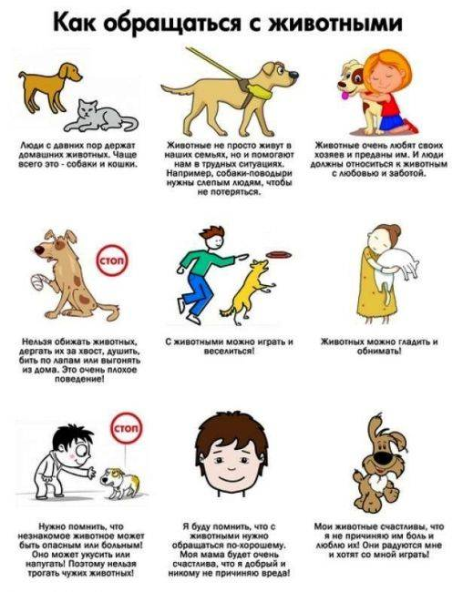 Как дети должны обращаться с собаками